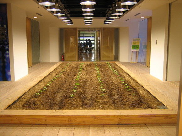 10-urban-farm
