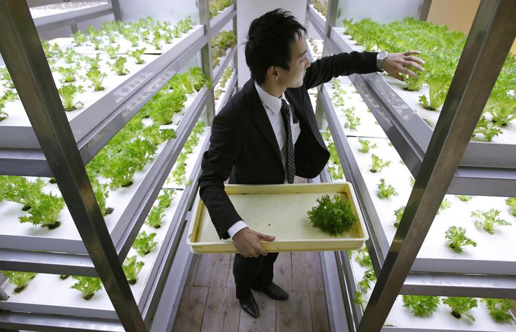 tokyo des bureaux o la nature reprend ses droits mode s d 39 emploi. Black Bedroom Furniture Sets. Home Design Ideas