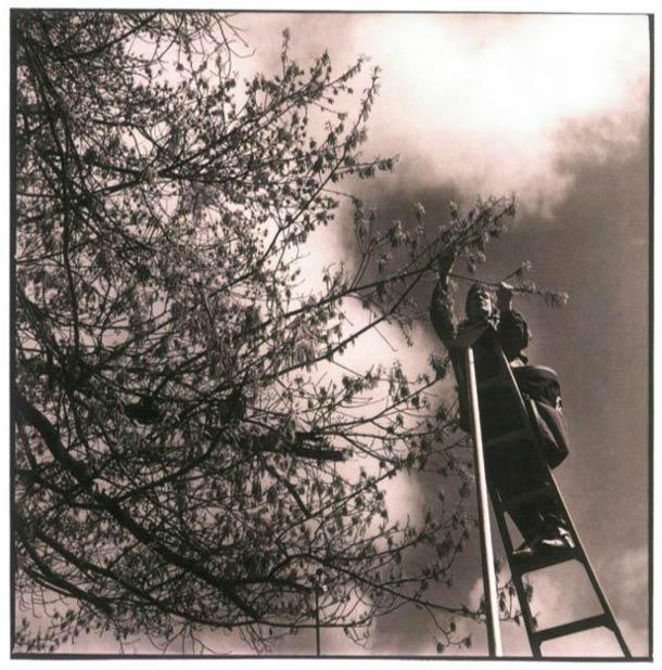 En communion avec la nature, ce monsieur récolte le pollen sur les arbres